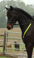 Reflex-Vorderzeug fürs Pferd